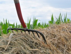 pitchfork image w grass