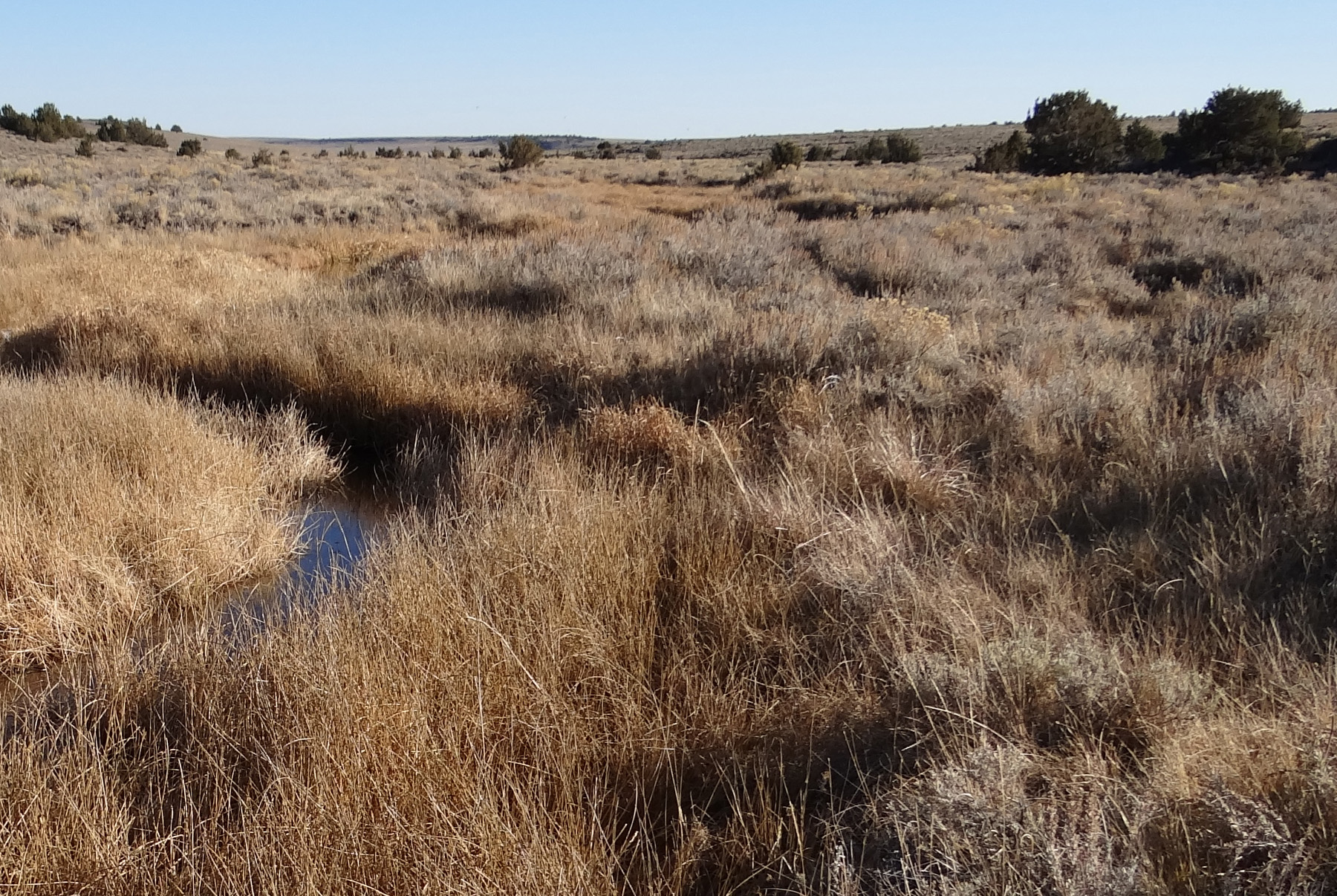 Guano Creek, BLM - Oct. 2013