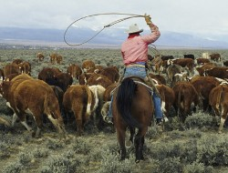 rancher-1a
